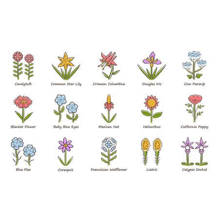 Set di icone di colore di fiori selvatici. Fiore di primavera. Fiori di campo della California con nomi. Infiorescenze di piante da fiore da giardino. Fascio botanico. Prato, erbaccia di campo. Illustrazioni vettoriali isolate