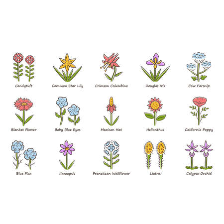 Wild flowers color icons set. Spring blossom. California wildflowers with names. Garden blooming plants inflorescences. Botanical bundle. Meadow, field weed. Isolated vector illustrations Illustration