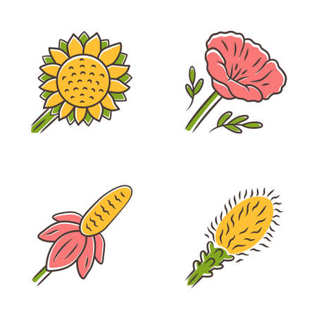 Wild flowers color icons set. Helianthus, California poppy, mexican hat, liatris. Blooming wildflowers, weed. Spring blossom. Field, meadow flowering plants. Isolated vector illustrations Illustration