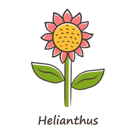 Helianthus color icon. Sunflower head with name inscription. Field blooming flower. Agriculture symbol. Wild plant inflorescence. Summer blossom. Isolated vector illustration Illustration