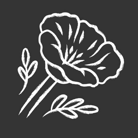 California poppy chalk icon. Papaver rhoeas. Corn rose blooming wildflower. Herbaceous plants. Field common poppy. Summer blossom. Isolated vector chalkboard illustration