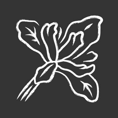 Douglas iris plant chalk icon. California blooming wildflower. Garden flower, weed. Iris douglasiana. Spring blossom. Isolated vector chalkboard illustration