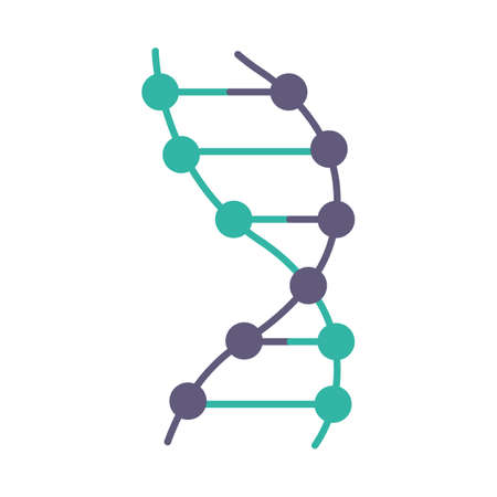 DNA helix violet and turquoise color icon. Z-DNA. Connected dots, lines. Deoxyribonucleic, nucleic acid structure. Chromosome. Molecular biology. Genetic code. Genetics. Isolated vector illustration
