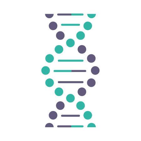 DNA spiral violet and turquoise color icon. Connected dots, lines. Deoxyribonucleic, nucleic acid helix. Spiraling strands. Chromosome. Molecular biology. Genetic code. Isolated vector illustration