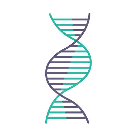 Right-handed DNA helix violet and turquoise color icon. B-DNA. Deoxyribonucleic, nucleic acid structure. Spiral strand. Chromosome. Molecular biology. Genetic code. Isolated vector illustration