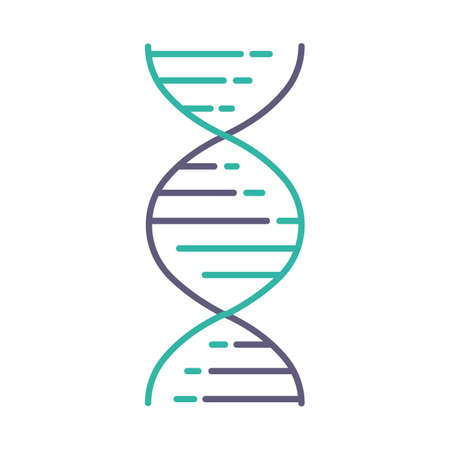 DNA double helix violet and turquoise color icon. Deoxyribonucleic, nucleic acid structure. Spiraling strands. Chromosome. Molecular biology. Genetic code. Genome. Isolated vector illustration Ilustração