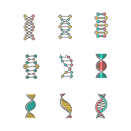 DNA double helix color icons set. Deoxyribonucleic, nucleic acid structure. Spiraling strands. Chromosome. Molecular biology. Genetic code. Genome. Genetics. Medicine. Isolated vector illustrations