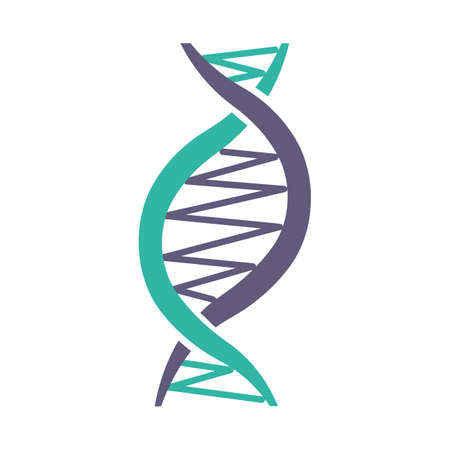 Left-handed DNA helix violet and turquoise color icon. Z-DNA. Deoxyribonucleic, nucleic acid structure. Spiral strand. Chromosome. Molecular biology. Genetic code. Genome. Isolated vector illustration