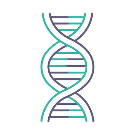 DNA helix violet and turquoise color icon. Deoxyribonucleic, nucleic acid structure. Spiraling strands. Chromosome. Molecular biology. Genetic code. Genome. Genetics. Isolated vector illustration Ilustração