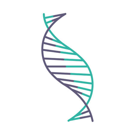 DNA spiral strand violet and turquoise color icon. Deoxyribonucleic, nucleic acid helix stripes. Chromosome. Molecular biology. Genetic code. Genome. Genetics. Medicine. Isolated vector illustration Illustration