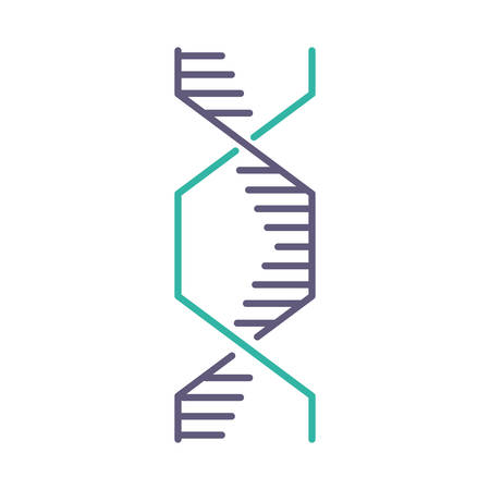 Hexagonal DNA helix violet and turquoise color icon. Deoxyribonucleic, nucleic acid structure. Spiraling strands. Chromosome. Molecular biology. Genetic code. Genome. Isolated vector illustration