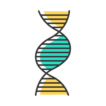 Right-handed DNA helix color icon. B-DNA. Deoxyribonucleic, nucleic acid structure. Spiral strand. Chromosome. Molecular biology. Genetic code. Genome. Genetics. Medicine. Isolated vector illustration Иллюстрация