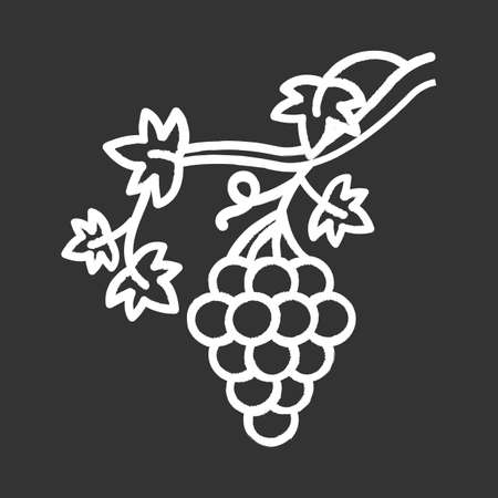 Grapevine chalk icon. Brush of grapes on branch. Viticulture, winemaking. Symbol of wealth, abundance, prosperity and fertility. Bible metaphor of faith. Isolated vector chalkboard illustration