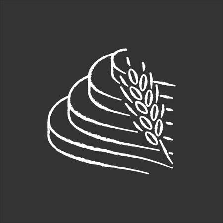 Rice terraced field chalk icon. Agricultural products. Indonesian farmland. Nature of tropical island. Asian terrace farming practice. Growing cereal. Isolated vector chalkboard illustration