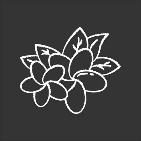Plumeria chalk icon. Two exotic region flowers. Flora of Indonesian forests. Small tropical plants. Blossom of frangipani with leaves. Nature of Bali. Isolated vector chalkboard illustration