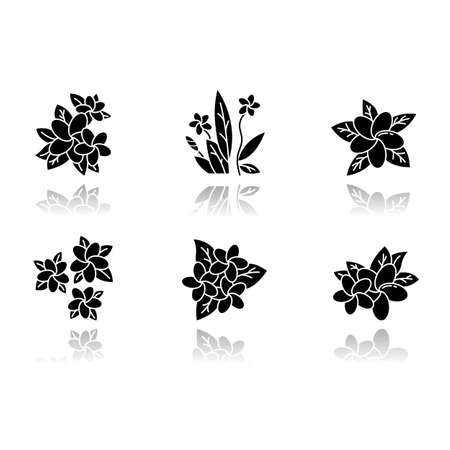 Plumeria drop shadow black glyph icons set. Exotic region flowers. Flora of Indonesian islands. Small tropical plants. Blossom of frangipani with leaves. Nature of Bali. Isolated vector illustrations