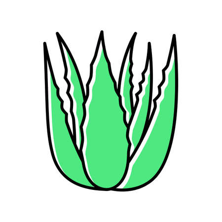Succulent sprouts green color icon. Growing aloe vera. Cactus leafs and medicinal herb. Decorative plant. Botanics, flora. Ingredient for vegan cosmetic. Isolated vector illustration