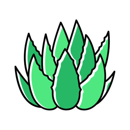 Cactus sprouts green color icon. Aloe vera leaves. Growing medicinal herb. Decorative plant. Botanical ingredient for organic cosmetic. Dermatology and cosmetology. Isolated vector illustration