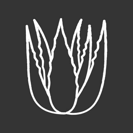 Succulent sprouts chalk white icon on black background. Growing aloe vera. Cactus leafs and medicinal herb. Decorative plant. Ingredient for vegan cosmetic. Isolated vector chalkboard illustration