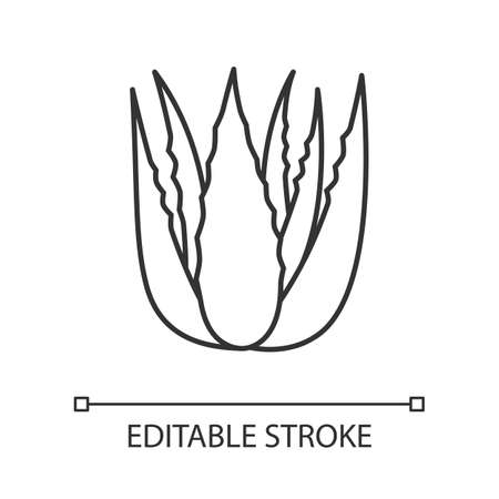 Succulent sprouts pixel perfect linear icon. Growing aloe vera. Cactus leafs and medicinal herb. Thin line customizable illustration. Contour symbol. Vector isolated outline drawing. Editable stroke