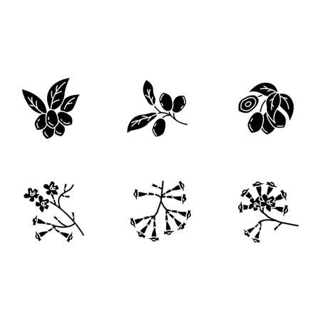 Brazilian flora black glyph icons set on white space. Miracle fruit. Ipe tree. Plumeria and jojoba. South american plant. Botany. Tropical blossom. Silhouette symbols. Vector isolated illustration Illustration