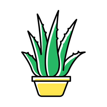Houseplant green color icon. Potted aloe vera. Cactus sprouts and succulent leaves. Growing medicinal herb. Decorative plant. Evergreen flora. Cultivation, vegetation. Isolated vector illustration