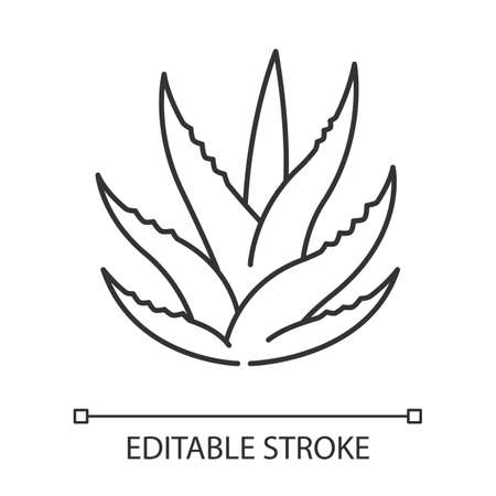 Succulent pixel perfect linear icon. Aloe vera sprouts. Cactus leafs. Growing medicinal herb. Thin line customizable illustration. Contour symbol. Vector isolated outline drawing. Editable stroke