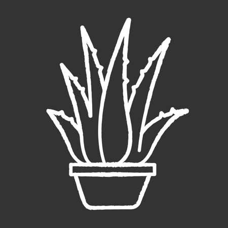 Houseplant chalk white icon on black background. Potted aloe vera. Cactus sprouts and succulent leaves. Growing medicinal herb. Decorative plant. Isolated vector chalkboard illustration