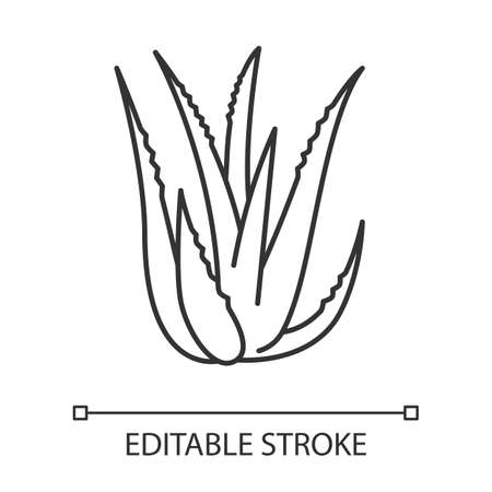 Aloe vera pixel perfect linear icon. Succulent growing sprouts. Medicinal herb for skincare. Thin line customizable illustration. Contour symbol. Vector isolated outline drawing. Editable stroke