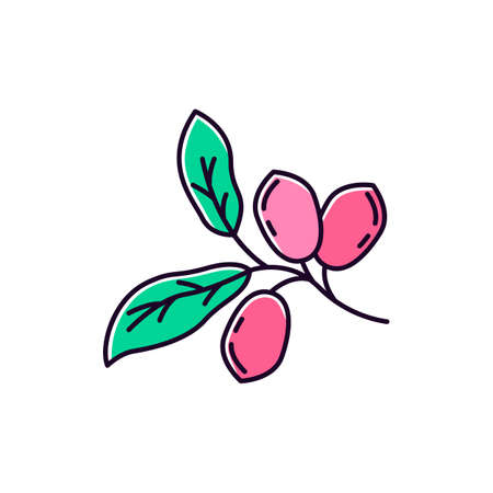 Jojoba green RGB color icon. Exotic fruits. Botany. Miracle fruit. Brazilian plant. Cosmetic oil production. Isolated vector illustration