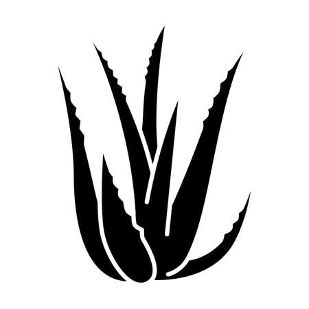 Aloe vera black glyph icon. Succulent growing sprouts. Cactus leaves and thorns. Medicinal herb for skincare. Decorative plant. Silhouette symbol on white space. Vector isolated illustration