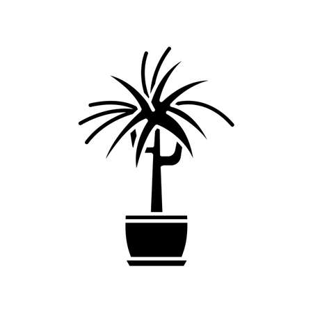 Dracaena black glyph icon. Potted ornamental houseplant. Dragon tree. Green indoor plant with spiky leaves. Natural home, office decor. Silhouette symbol on white space. Vector isolated illustration Illustration