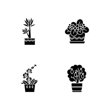 Decorative indoor plants black glyph icons set on white space. Houseplants. Domesticated plants. Orchid, yucca. Miniature citrus tree, African violet. Silhouette symbols. Vector isolated illustration