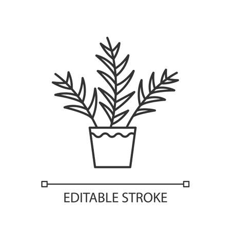 Parlor palm pixel perfect linear icon. Chamaedorea elegans. Neanthe bella palm. Majesty palm. Thin line customizable illustration. Contour symbol. Vector isolated outline drawing. Editable stroke