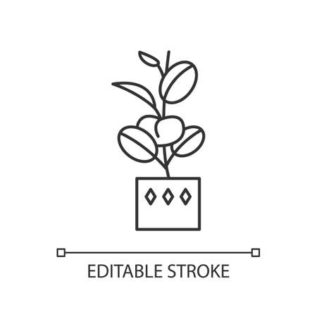 Ficus elastica pixel perfect linear icon. Rubber fig. Indian tree. Potted plant with oval leaves. Thin line customizable illustration. Contour symbol. Vector isolated outline drawing. Editable stroke  イラスト・ベクター素材