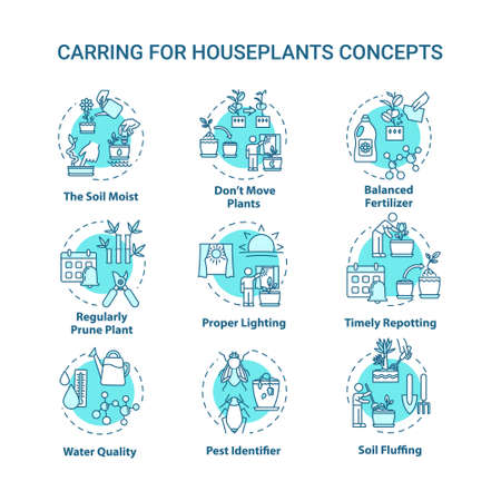 Houseplants caring concept icons set. Balanced fertilizer. Proper lighting. Home gardening idea thin line RGB color illustrations. Timely repotting. Vector isolated outline drawings. Editable stroke