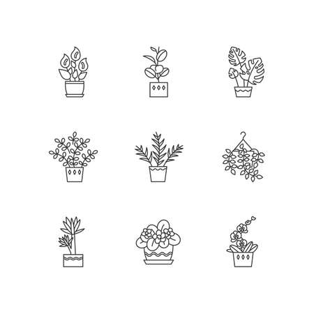 Domesticated plants pixel perfect linear icons set. Houseplants. Violet, ficus, monstera. Lily, pothos. Customizable thin line contour symbols. Isolated vector outline illustrations. Editable stroke Illustration