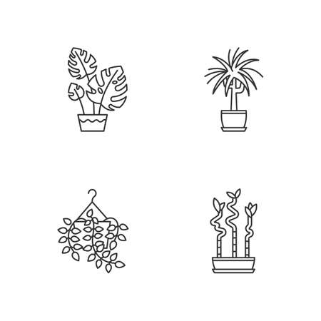 Domesticated plants pixel perfect linear icons set. Houseplants. Pothos, dracaena. Monstera, bamboo. Customizable thin line contour symbols. Isolated vector outline illustrations. Editable stroke Vektorgrafik