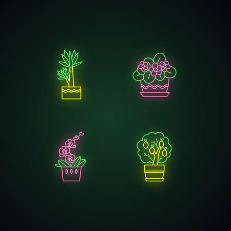 Decorative indoor plants neon light icons set. Houseplants. Domesticated plants. Orchid, yucca. Citrus tree, African violet. Signs with outer glowing effect. Vector isolated RGB color illustrations