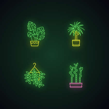 Domesticated plants neon light icons set. Houseplants. Ornamental indoor plants. Pothos, dracaena. Monstera, lucky bamboo. Signs with outer glowing effect. Vector isolated RGB color illustrations