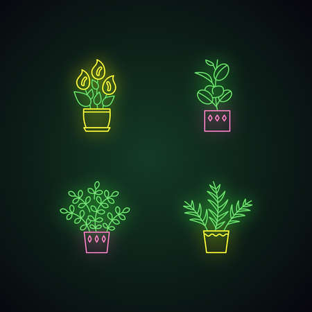Indoor plants neon light icons set. Houseplants. Domesticated ornamental plants. Peace lily, zz plant. Parlor palm, ficus. Signs with outer glowing effect. Vector isolated RGB color illustrations Illustration