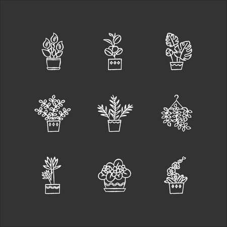 Domesticated plants chalk white icons set on black background. Houseplants. Decorative indoor plants. African violet, ficus, monstera. Peace lily, pothos. Isolated vector chalkboard illustrations