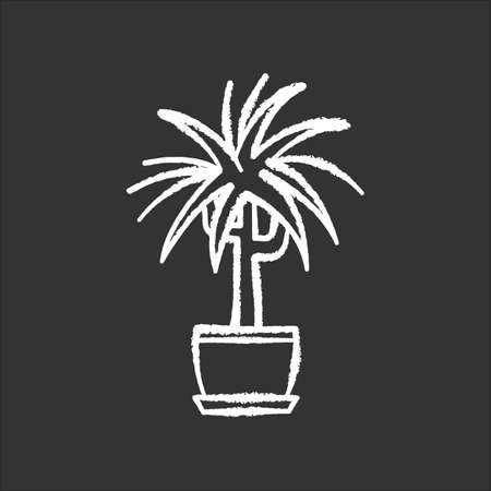 Dracaena chalk white icon on black background. Potted ornamental houseplant. Dragon tree. Green indoor plant with spiky leaves. Natural home, office decor. Isolated vector chalkboard illustration