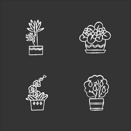 Decorative indoor plants chalk white icons set on black background. Houseplants. Domesticated plants. Orchid, yucca. Miniature citrus tree, African violet. Isolated vector chalkboard illustrations