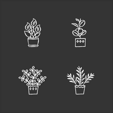 Indoor plants chalk white icons set on black background. Houseplants. Domesticated ornamental plants. Peace lily, zz plant. Parlor palm, ficus. Isolated vector chalkboard illustrations