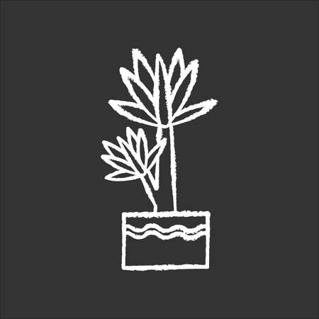 Yucca chalk white icon on black background. Small exotic indoor palm. Mexican tree. Decorative houseplant with pointed leaves. Natural home, office decor. Isolated vector chalkboard illustration