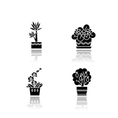 Decorative indoor plants drop shadow black glyph icons set. Houseplants. Domesticated plants. Orchid, yucca. Miniature citrus tree, African violet. Isolated vector illustrations on white space