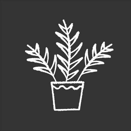Parlor palm chalk white icon on black background. Chamaedorea elegans. Neanthe bella palm. Majesty palm. Indoor tropical plant. Leafy decorative houseplant. Isolated vector chalkboard illustration