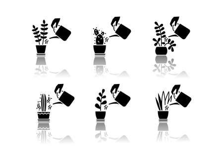 Houseplant care drop shadow black glyph icons set. Domestic plant cultivation. Watering domestic plants. Moisturizing, rehydrating soil. Moistening ground. Isolated vector illustrations on white space