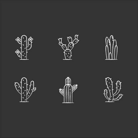 Cactuses chalk white icons set on black background. American desert plants. Family Cactaceae. Different prickly succulents. Arid area thorny wildflowers. Isolated vector chalkboard illustrations